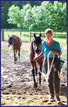 Vaccinations for Pregnant Mares, Horse Wellness Program