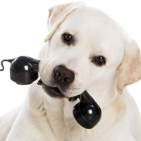 Picture of Dog with a Phone