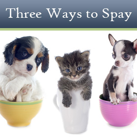 Three Ways to Spay